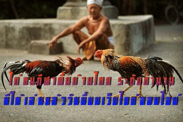 ไก่ชนกีฬาพื้นบ้านไทย